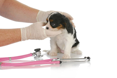 dog-heartworms-stethoscope2