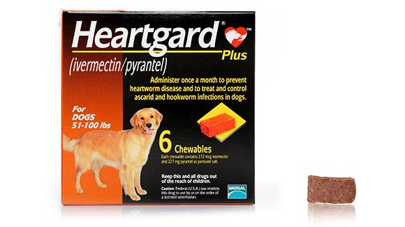 Heartgard-Plus-Dog-Image