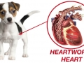 03-HEARTWORM3-copy